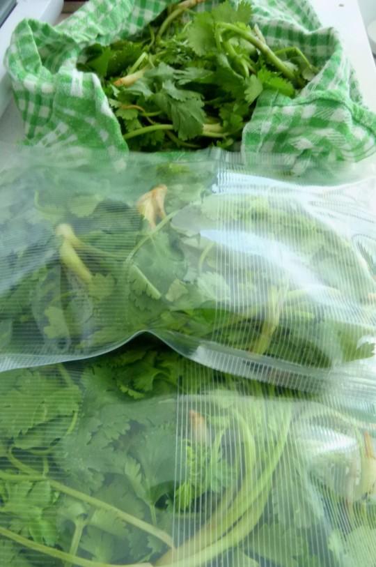 MissFoodFairy's sealed coriander