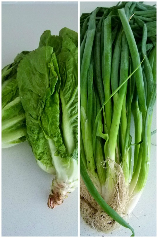 MissFoodFairy's sisters lettuce & spring onions