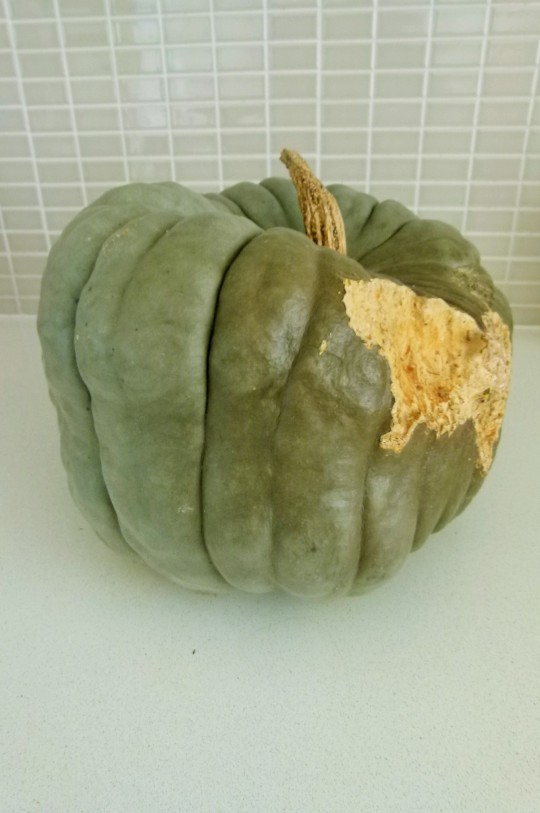 MissFoodFairy Jarrahdale pumpkin