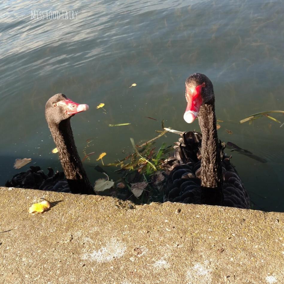 Black swans | Miss Food Fairy